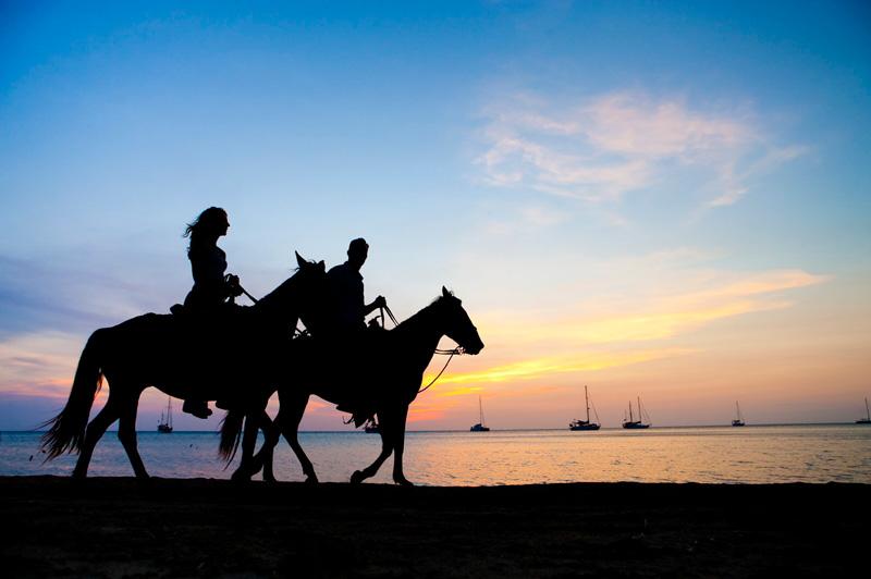 Phuket Horse Riding Horse Riding In Phuket Riding